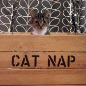 Cat Beds (2)